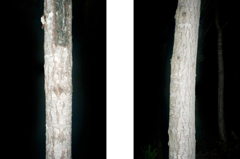 Timber Cove (#15), 2009
