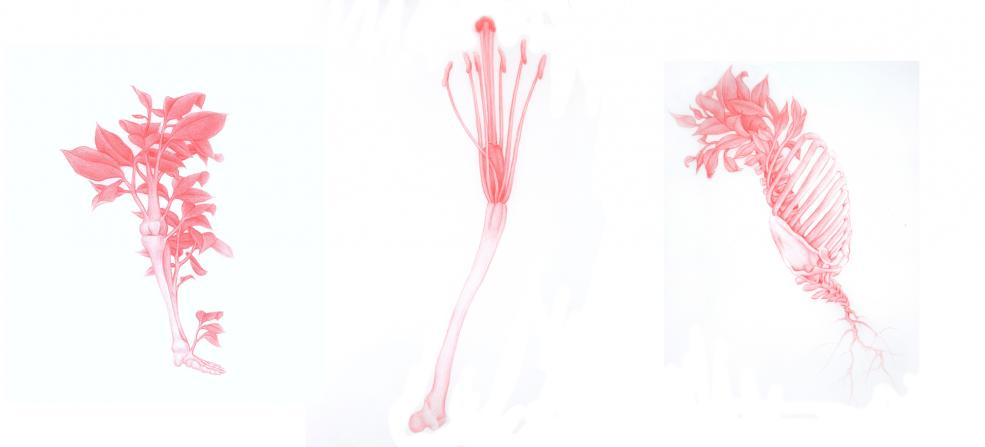 From left to right: Bones, Limbs 2 (red), Bones, Limbs 4 (red) and Bones, Limbs 5 (red)