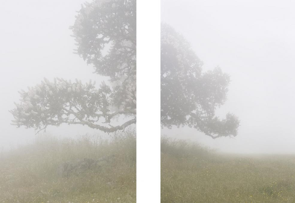 Timber Cove (#13), 2009