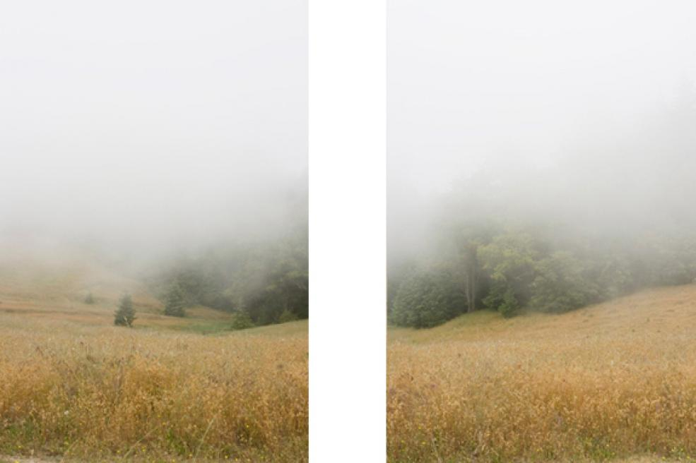 Timber Cove (#49), 2009