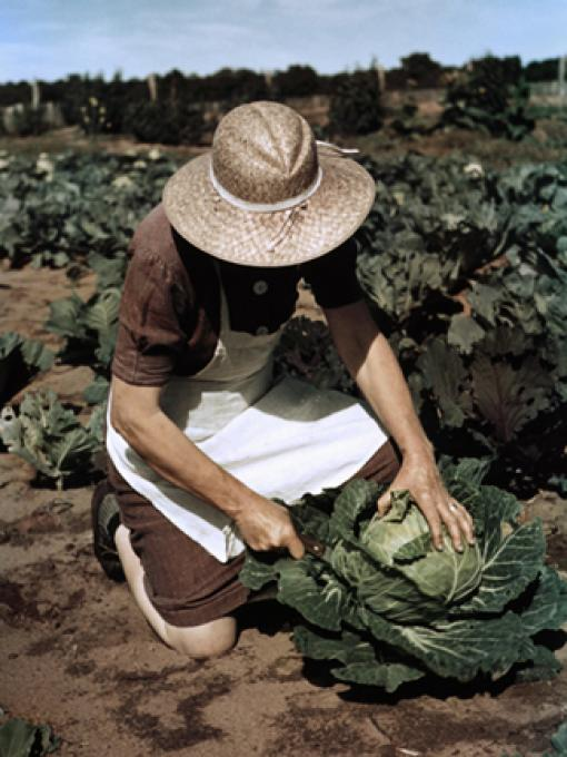 Virginia Norris with homegrown cabbage, one of the many vegatables which the homesteaders grow in abundance, 2010